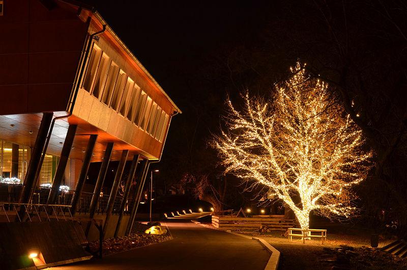 Strom obalený LED světelným řetězem - Kadaň Split